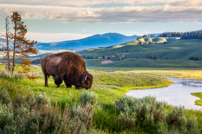 Color - Yellowstone - Jorgen Hog